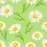Margherite bianche su fondo verde Modello senza cuciture floreale con i camomiles royalty illustrazione gratis