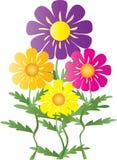 Margherite Colourful illustrazione vettoriale