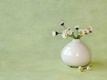 Margherite selvatiche in un piccolo vaso Fotografia Stock