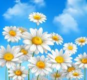 Margherite su cielo blu Fotografia Stock