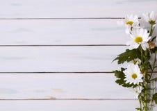 Margherite su legno fotografie stock libere da diritti