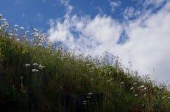 Margherite su una cresta veduta contro il cielo soleggiato nell'entrata di Nuchatlitz, Columbia Britannica immagini stock