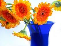 Margherite sul vaso blu Fotografia Stock