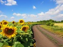 Marginaler av solrosfält med vägen, Ryssland royaltyfri fotografi