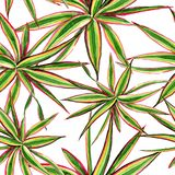 Marginata de Dracaena tricolore Ensemble d'illustration de fond d'aquarelle Modèle sans couture de fond illustration stock