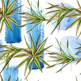 Marginata de Dracaena tricolore Ensemble d'illustration de fond d'aquarelle Modèle sans couture de fond illustration libre de droits