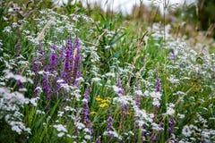 Marginell växtgemenskap Royaltyfri Fotografi