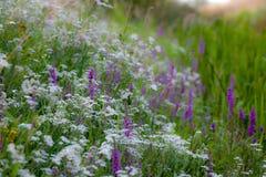 Marginell växtgemenskap Royaltyfria Foton