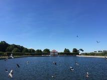 Marglisty pałac Peterhof Świątobliwy Petersburg kierdel gołębie zdejmuje w parku obraz stock