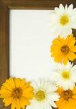 marguerite πλαισίων στοκ φωτογραφία με δικαίωμα ελεύθερης χρήσης