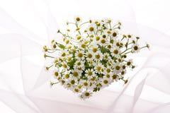 Marguerite. White daisy flowers on veil Stock Image