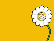 Marguerite Background Royalty Free Stock Images