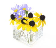 Marguerite bleue et rudbeckia dans un vase en verre Images stock