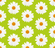 Marguerite daisy flowers seamless pattern Royalty Free Stock Image