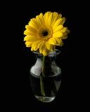Marguerite dans un vase image libre de droits