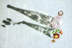 Marguerite dans une bouteille en verre photographie stock libre de droits