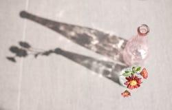 Marguerite dans une bouteille en verre photo libre de droits