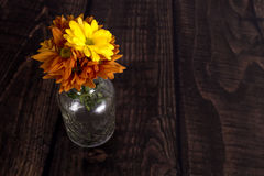 marguerite de chrysanthème Photographie stock