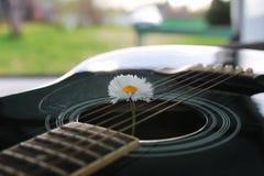 Marguerite de ficelle de guitare Image stock