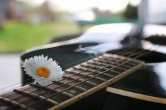 Marguerite de ficelle de guitare Photo libre de droits