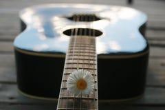 Marguerite de ficelle de guitare Photographie stock
