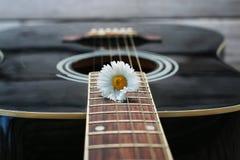 Marguerite de ficelle de guitare Images libres de droits
