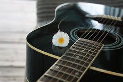Marguerite de ficelle de guitare Photographie stock libre de droits