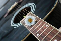 Marguerite de ficelle de guitare Image libre de droits