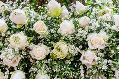Marguerite et rose de blanc photos stock