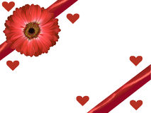 Marguerite et ruban rouges d'isolement de gerbera avec le fond de blanc de carte de jour de valentines de coeurs Photo libre de droits