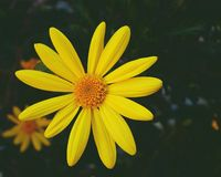 background of flower daisy flower macro view stock photography