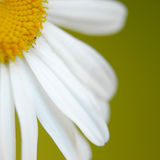 Marguerite II Images stock