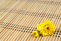 Marguerite jaune images stock
