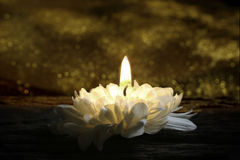 Marguerite kwiat jako świeczka Zdjęcia Stock