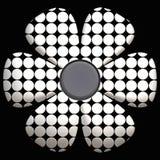 Marguerite noire et blanche Photo stock