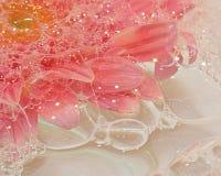 Marguerite rose dans les bulles photo libre de droits
