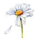 Marguerite (série C) illustration stock