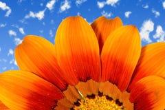 Marguerite sur le ciel Photos libres de droits