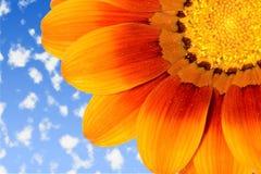 Marguerite sur le ciel Photos stock