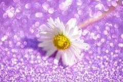 Marguerite sur le fond lilas, résumés Image libre de droits