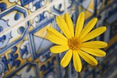 Marguerite sur les tuiles andalouses photo libre de droits
