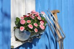 Marguerite sur une fenêtre, outils de jardin Photographie stock libre de droits