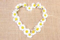 Marguerites blanches en forme de coeur sur la toile de jute Images libres de droits
