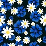 Marguerites blanches et bleuets bleus Photographie stock libre de droits