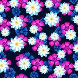 Marguerites blanches, oeillet rose et bleuets bleus Photos libres de droits