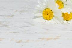 Marguerites blanches sur un fond en bois blanc Photo libre de droits