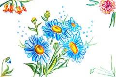 Marguerites bleues et d'autres fleurs Illustration de Vecteur