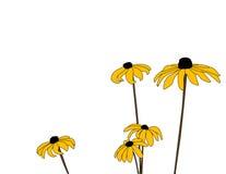 Marguerites cinq Images libres de droits