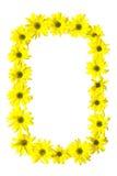 Marguerites des prés jaunes Photos stock