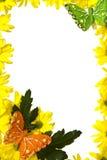 Marguerites des prés jaunes photographie stock libre de droits